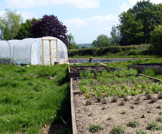 From Farm to Table: Will Devlin at The Small Holding watering new seedlings