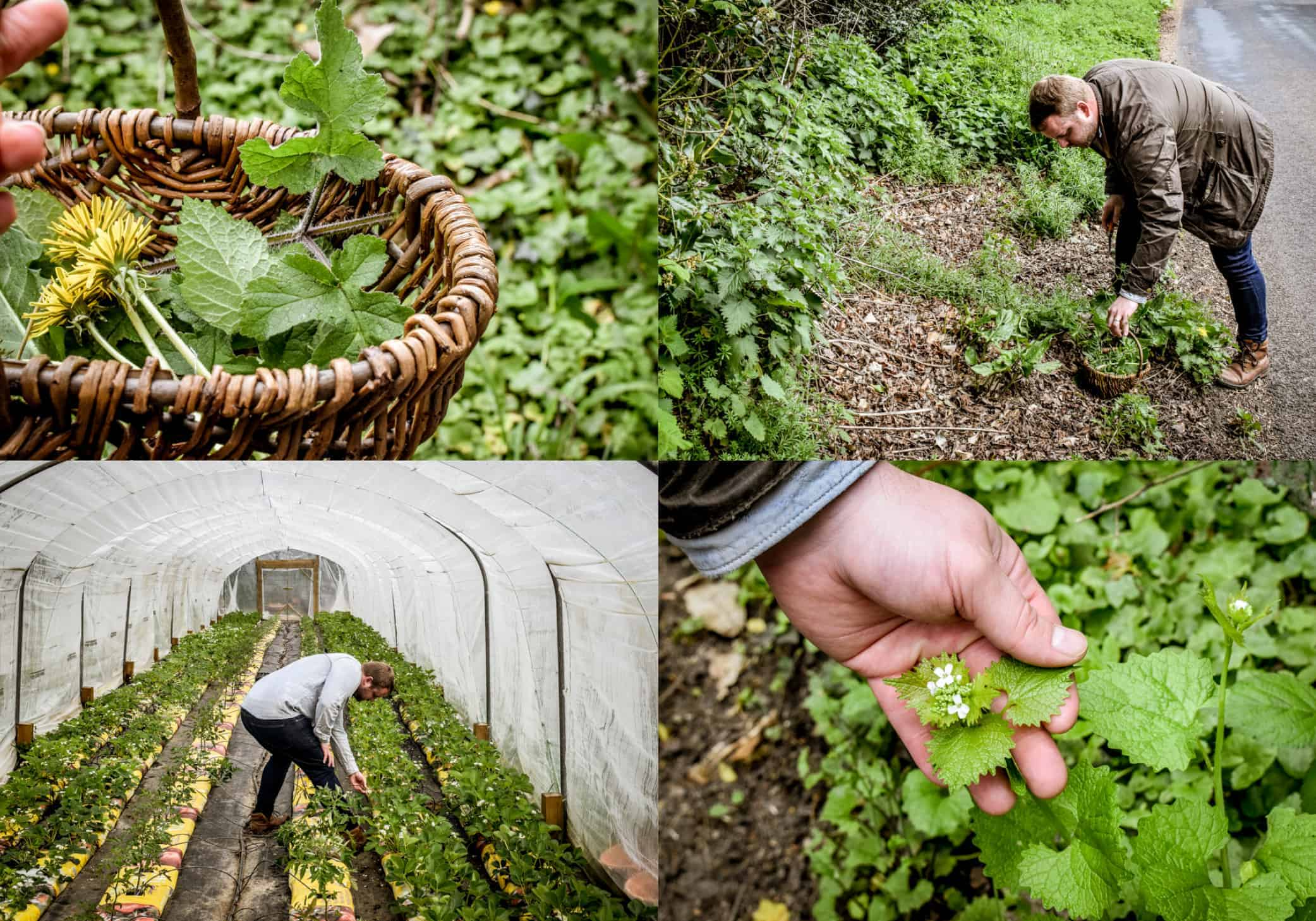 Farm and Forage at The Small Holding